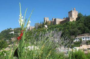 Vista de la Alhambra desde la terraza de nuestra azotea